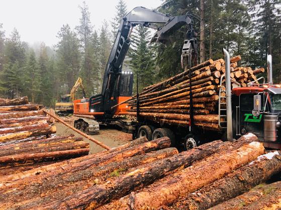 TCI Logging Site