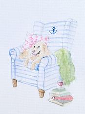dog in chair.jpg