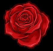 07 ROSE R+T.png