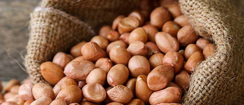 Organic Groundnut seeds