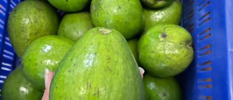 Avocado - Pesticide Free