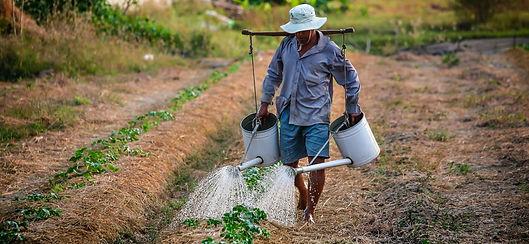 watering-1501209_1920_edited.jpg