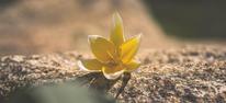 flower-745738_1920.jpg