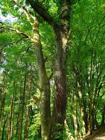forêt2.jpg