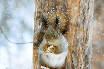 squirrel-4700919_1920.jpg