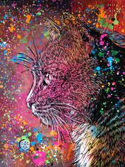 Le Chat sur fond rose