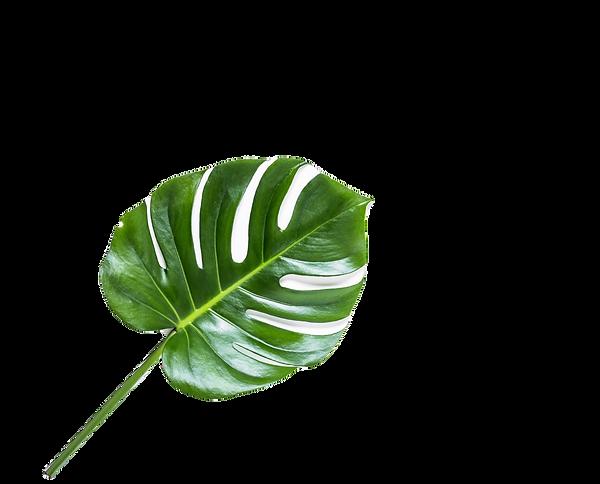 Leaf%25252520%25252520_edited_edited_edi