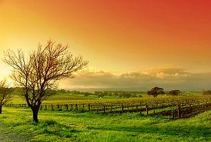 Raffaldini-Red Orange Sky .jpg