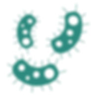 batterio_Tavola disegno 1.jpg