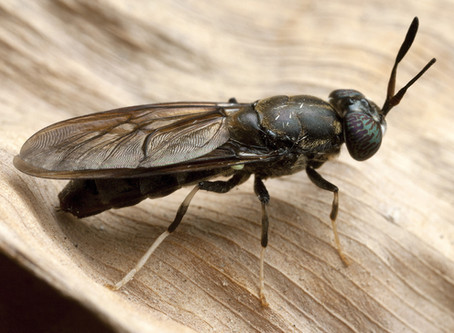 Il progetto Bugs Factory: cambiamo idea sugli insetti