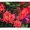 Thumbnail: 展示作品|choji_photoキャンバスプリントパネル|3枚組