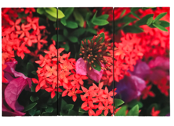 展示作品|choji_photoキャンバスプリントパネル|3枚組