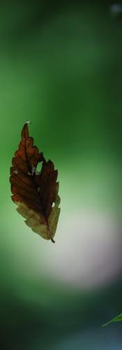 浮かぶ落ち葉