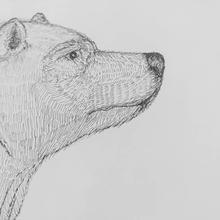 Bearwithinkonpaperfacingright