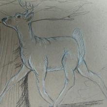 DeerGraphiteonPaperRunning