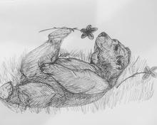 Bearwithinkonpapersellingtheroses