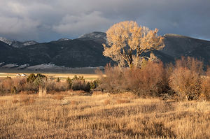 Open Space and Wildlife habitat in the Ruby Valley