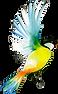 oiseauRDVLH.png