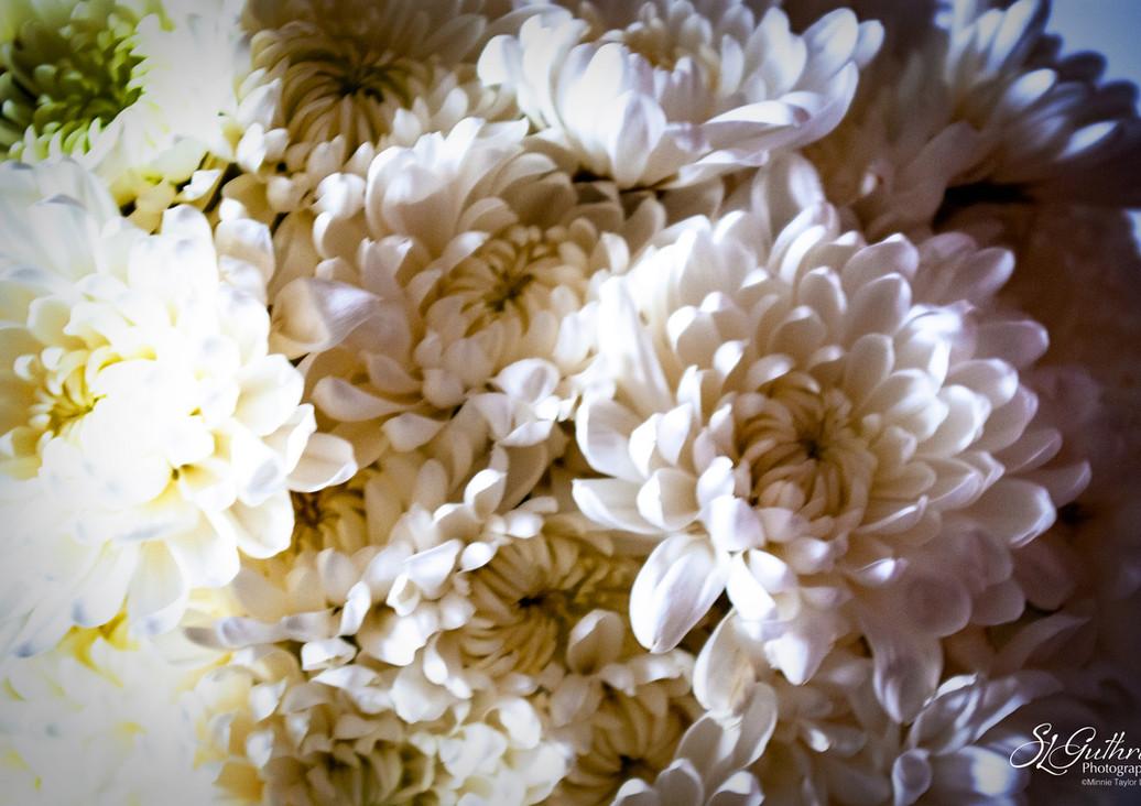 Chrysanthemums: random market purchase