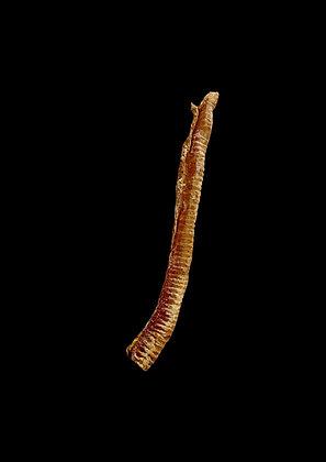 XXL Trachea 50cm