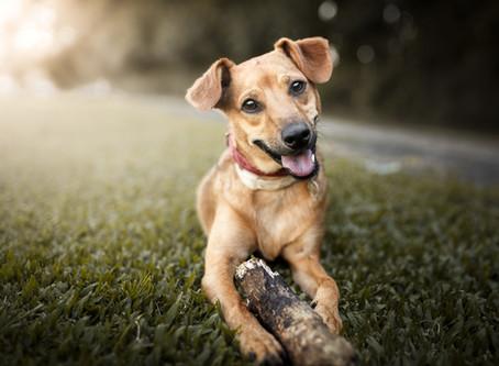 Como permitir animais no condomínio, sem atritos