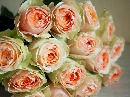 Розы пионовидные Гравити