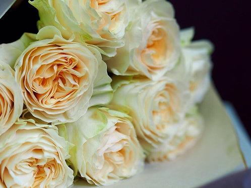 Садовые пионовидные розы