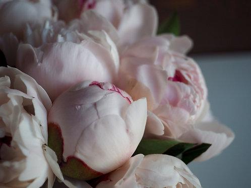 Пионы краснодарские нежно розовые