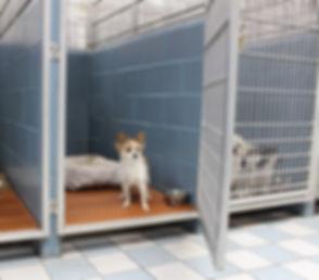 dog kennel runs