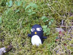 Flickr - Pingouino…! Dans la mousse