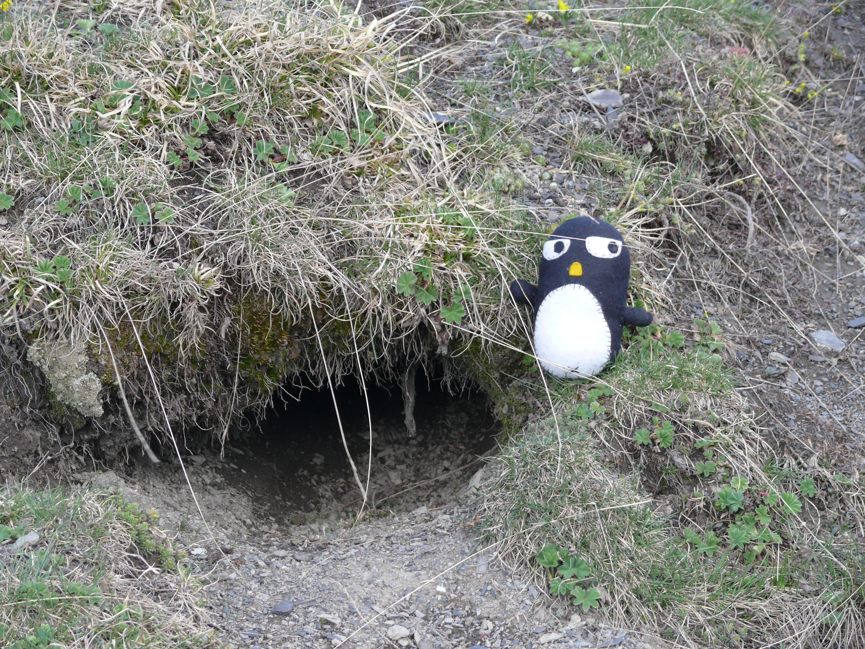 Flickr - Pingouino…! Devant un terrier