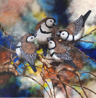 Australian Double Barred Finches