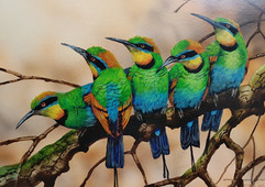 Australian Rainbow Bee-eaters