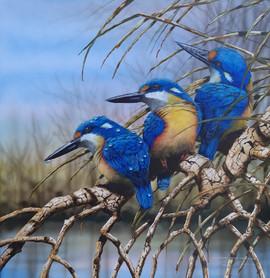 Azure Kingfishers