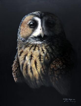 European Tawny Owl