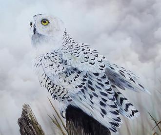 U.S. Snowy Owl