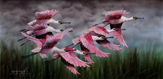 South American Rosette Spoonbills