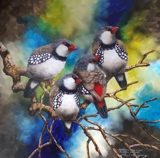 AustralianDiamond Firetail Finches