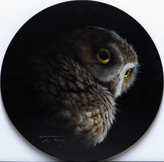 Aust Boobook Owl