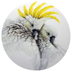 Australian Sulphur- Crested Cockatoos