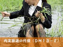 dm13-2.jpg