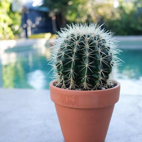 Cosas que no sabías de los cactus