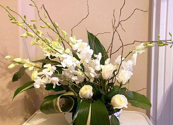 Classic white orchids