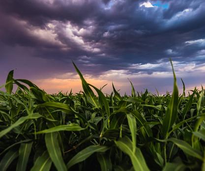 Sunset and Grass-3.jpg
