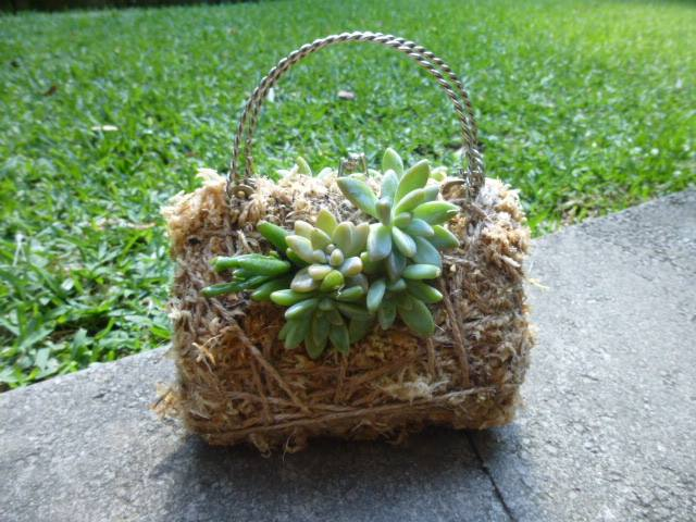 Handbag Kokedama $35