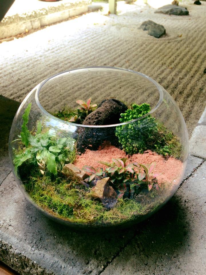 Fish bowl terrarium $75