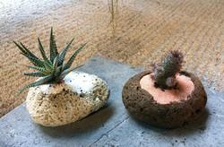 Cactus in lava stone $29 each_edited