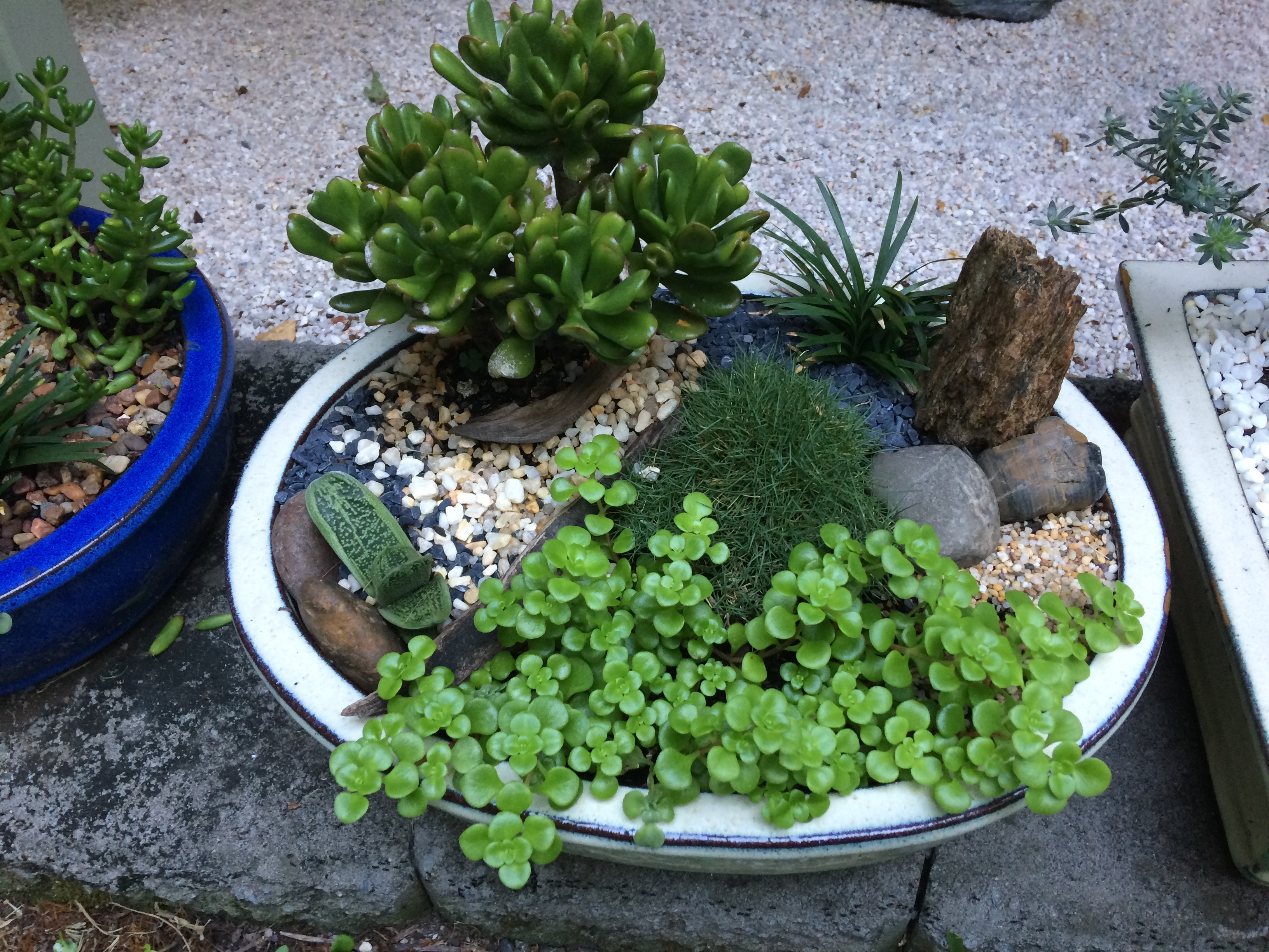 Miniature Japanese garden2 $75