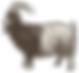 Halal,Goat,Mutton,Kiko,Goat's meat,Veal,Farm Animal,Livestock