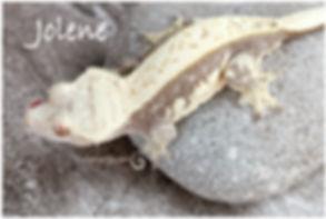 Jolene--2-17-9041-Edit.jpg